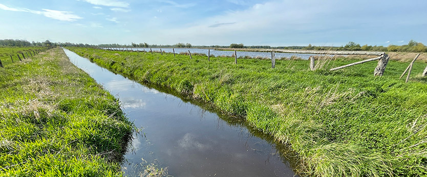 Rundwanderweg Steinhuder Meer