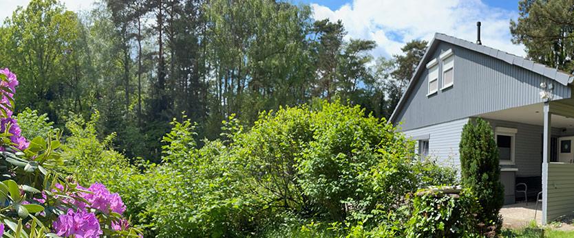 Steinhuder Meer Ferienhaus Rhododendron grüner Garten